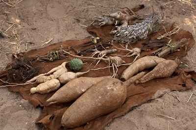 How Did Africans Tan Skins Old Bush Crafts Of Africa