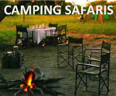 Affordable tented camping safari exploring the wildlife of Etosha