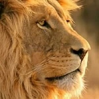Affordable lodge safaris in Namibia