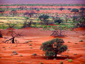 Experience the stunning beauty the Namib-Naukluft National Park in Namibia