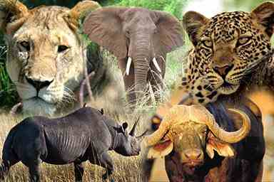 Top quality wildlife safari in the Kruger National Park combined with the vibrant city of Cape Town.